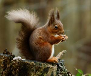 Revision Strategies Squirrel