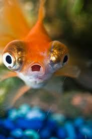Revision strategies fish